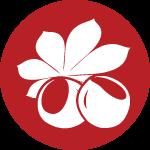 red-chestnut